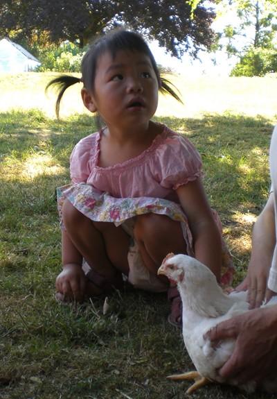 4juli-kylling.jpg