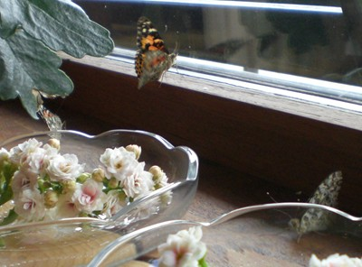 11-okt-3-sommerfugle.jpg