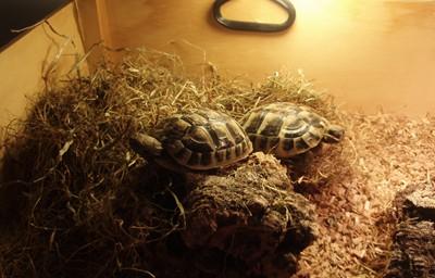 skildpadder.jpg