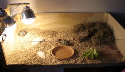 skildpadde2.jpg