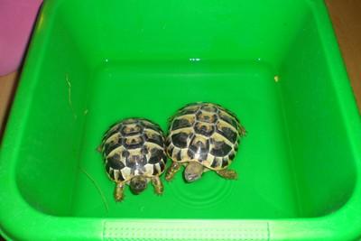 skildpadde4.jpg