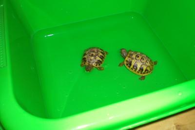 skildpadder3.jpg